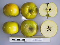 Cross section of Andre Briollay, National Fruit Collection (acc. 1947-463).jpg
