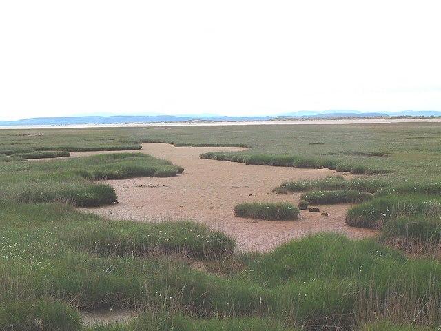 Culbin Salt Marsh - geograph.org.uk - 185128