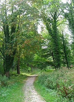 Cycle Track through Houghton Forest - geograph.org.uk - 236571