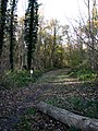 Cycle trail through Long Plantation - geograph.org.uk - 618441.jpg