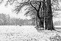 Dülmen, Kirchspiel, Bauerschaft Börnste -- 2021 -- 4406 (bw).jpg