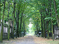 Day 1- The main boulevard of the jewish cemetery of Lodz (45073954).jpg