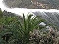 De la niebla 3 - panoramio.jpg