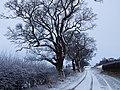 December snow, near Brampton - geograph.org.uk - 1639270.jpg