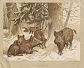 Deiker Jagdbare Tiere 1093234.jpg