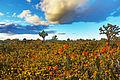 Desert Miracle (16560620830).jpg