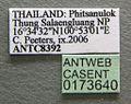 Diacamma scalpratum casent0173640 label 1.jpg