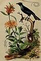 Dictionnaire pittoresque d'histoire naturelle et des phénomènes de la nature (1838) (14758186156).jpg