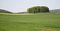Die K50 am Katzbach mit Blick Richtung Ochsenkamp (Bad Driburg).JPG