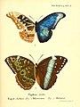 Die ausländischen Schmetterlinge in Abbildungen nach der Natur (Tab. XLII) (6011998853).jpg