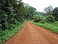 Dirt Road on Principe (20569340424).jpg