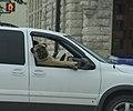 Dog (8098066919).jpg
