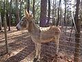 Donkey, Boat Basin Park, Bainbridge.JPG