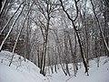 Donsbrüggen schlucht winter.jpg