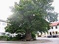 Dorflinde Assling-1.jpg