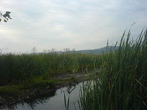 Dragoman marsh - Image: Dragoman blatoto