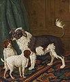 Drie honden in een interieur, Tethart Haag, 1792.jpg