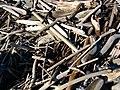Drift Wood (4379277968).jpg