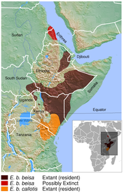 East African oryx Oryx beisa distribution map 2.png