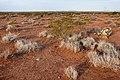 East of the Black Range - Flickr - aspidoscelis (1).jpg