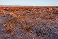 East of the Black Range - Flickr - aspidoscelis (12).jpg