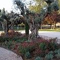 El Ayuntamiento recaba la opinión de la ciudadanía para mejorar zonas verdes y arbolado viario (01).jpg