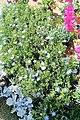 El Zohour Showroomمعرض الزهور بحديقة الاورمان 6.jpg