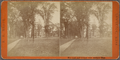 Elm arch and library, Andover, Mass, by Hamor, A. B. (Anderson B.), b. 1841.png