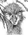 Emu at Caversham.TIF