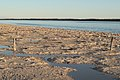 End of wetlands and old Lake Clifton pier near thrombolites at dusk, Western Australia.jpg