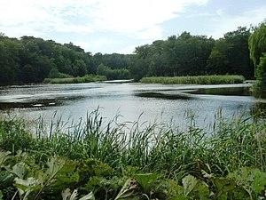 Enrum - Enrum Pond