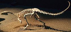 Eoraptor Japan.jpg