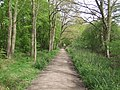 Ermine Street at Danemead Nature Reserve - geograph.org.uk - 787136.jpg