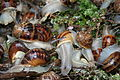 Escargots de Fitou.jpg
