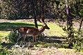 Espacio Natural de Doñana 110.jpg