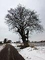 Essex Way near Ramsey, west of Harwich. - panoramio.jpg