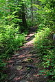 Evergreen Trail at Ricketts Glen State Park (2).JPG