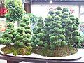 Exposición Bonsai 2008 Feria de Flores-04.JPG