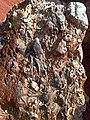 Fósiles marinos (El Madroño, Landa de Matamoros, Querétaro).jpg