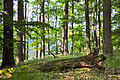FFH DE 2949-302 Grumsiner Forst Redernswalde-07.06.2014-2.JPG