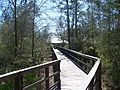 FL Blackwater River SP bdwlk03.jpg