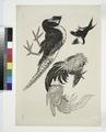 Faisans, oiseaux (NYPL b14506646-1149361).tiff