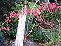 Fall colors (156162219dae4b76babcb38eb40f8ed0).JPG
