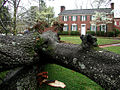 Fallen Oak (in front of King House) (3386942749).jpg