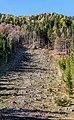 Ferlach Bodental Forst Kahlschlag 24102017 1735.jpg