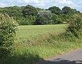 Field by Sandy Lane - geograph.org.uk - 860533.jpg