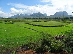 Fields in Hpa-An.jpg