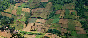 Fields in Quetzaltenango