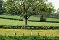 Fields near Carnroe, River Bann - geograph.org.uk - 1885426.jpg