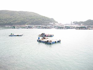 Aquaculture - Mariculture off High Island, Hong Kong